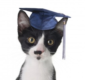 degree cat